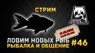 Стрим Русская Рыбалка 4 #46 - Ловим Новых Рыб. Рыбалка и Общение