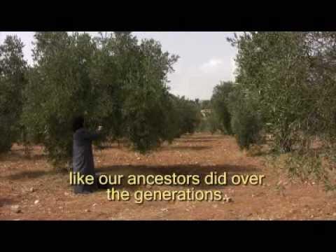 """Olive Tree"" (english)"