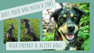 Hyper Active Dogs - Dog Enrichment Activities at home