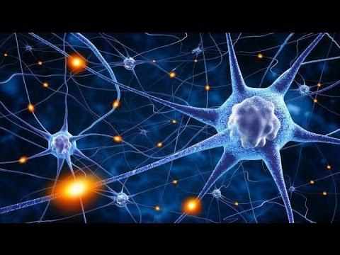 Неврин - Наша продукция - Экомед
