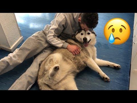 HARDEST DECISION OF MY LIFE..... [DOGGY HOSPITAL]