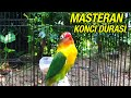 Masteran Ngekek Panjang Untuk Mengonci Durasi Lovebird  Mp3 - Mp4 Download