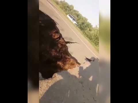 В Нижнеудинском районе из-за подтопления обрушился автомобильный мост