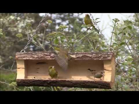 notre belle Nature - la mangeoire