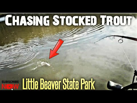 CHASING PRESSURED TROUT IN A PUBLIC LAKE (LITTLE BEAVER STATE PARK,WV)