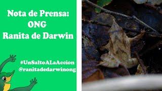 Avance 24 - Nota sobre ranita de Darwin con participación de nuestra ONG Ranita de Darwin