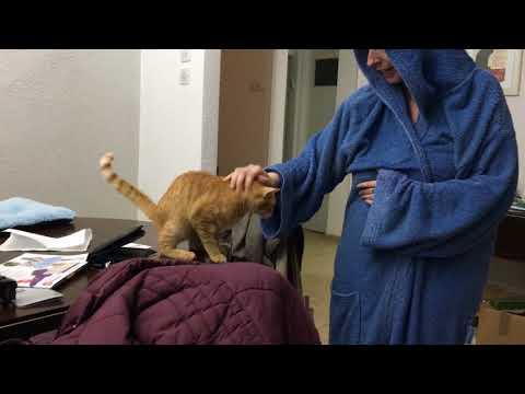 Redheaded Cat attack!