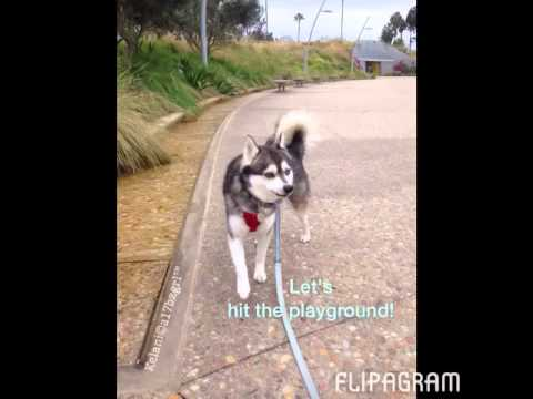 Kelani at Tongva Park 10/31/14