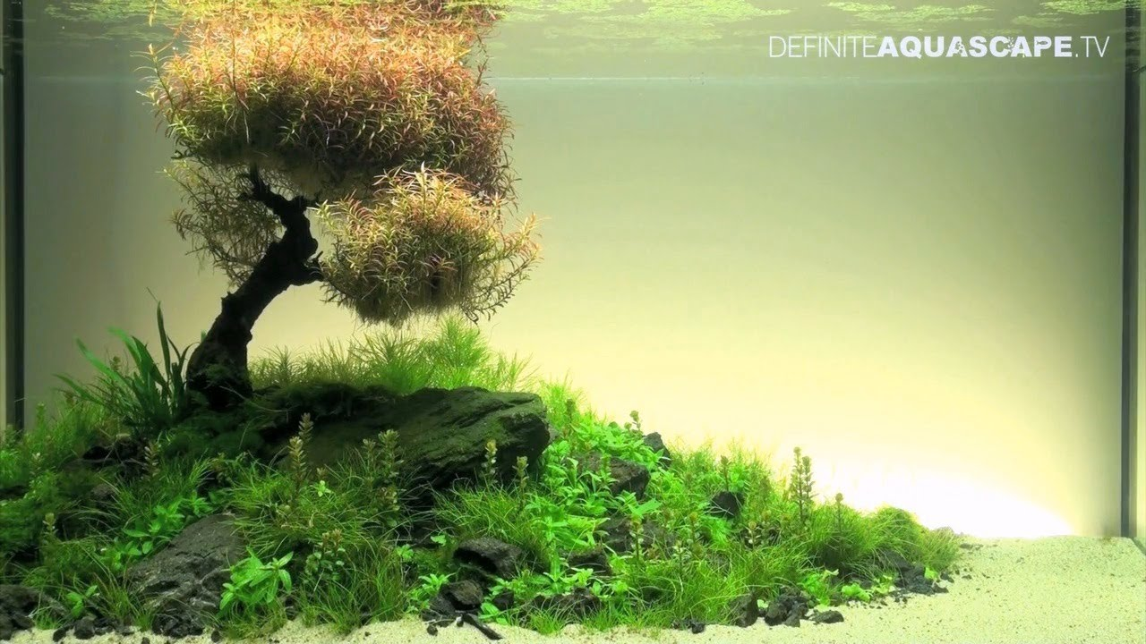 Aquascaping The Art Of The Planted Aquarium 2012 Xl Compilation Youtube