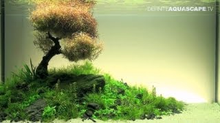 Aquascaping - The Art of the Planted Aquarium 2012 XL compilation