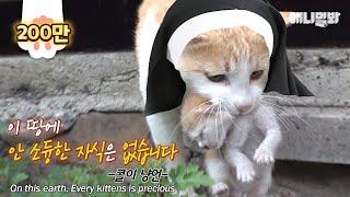 마더테레사 수냐옹 님 ㅣ Mother Teresa Cat Bless Hoomans