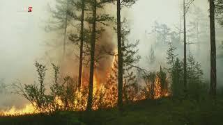 Якутия 24. О лесопожарной обстановке в Республике Якутия