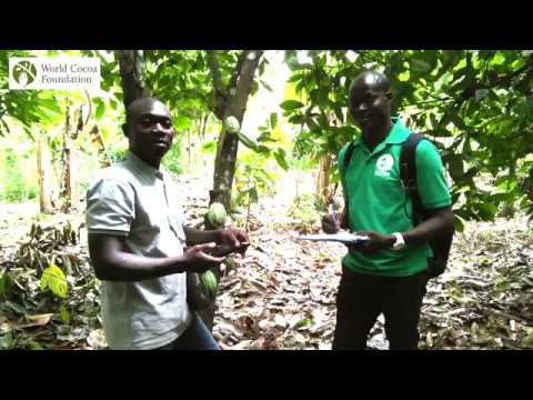 The Value of Data in Promoting Cocoa Sustainability