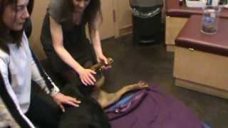 Calgary Vet Demonstrates Passive Range Of Motion Exercises For Pets