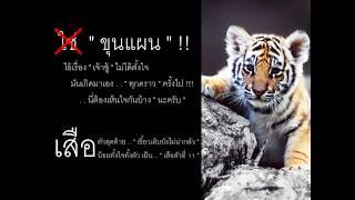 เสือ11ตัว - พงษ์สิทธิ์ คําภีร์