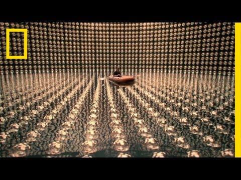 Stalking the Wild Nutrino | Cosmos: A Spacetime Odyssey
