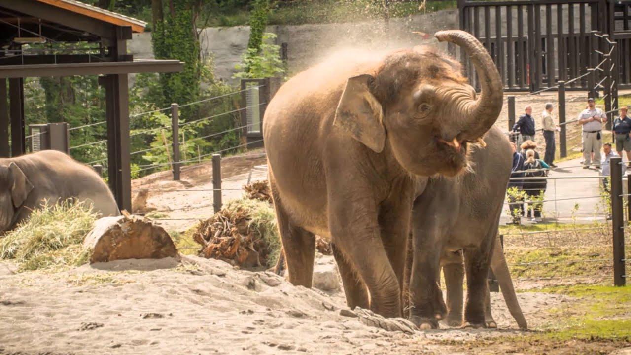 video portland zoo - 850×568