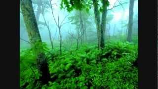Graham LIoris - Walking Through The Forest (Original Mix)