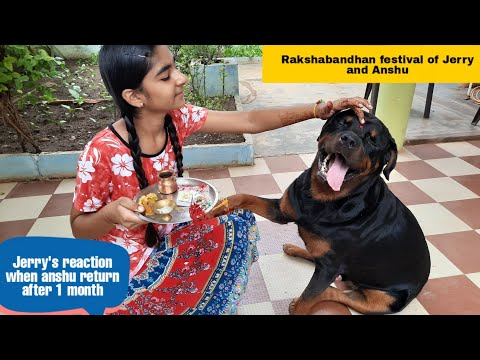 Dog reaction when owner meets after a long time||best trained rottweiler dog.