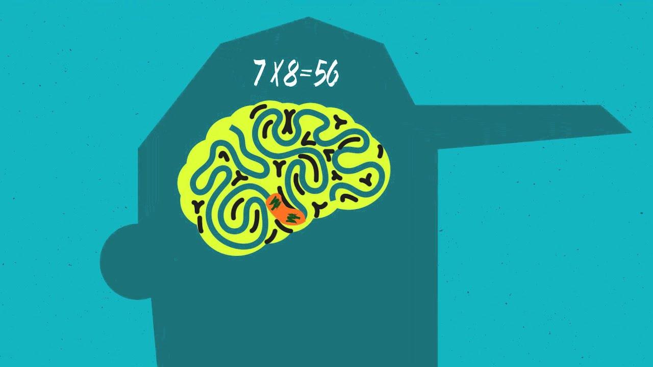 "Studi: Otak Monyet yang Suka ""Minum"" Tumbuh Lambat"