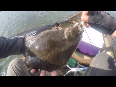 NJ Canoe Back Bay Fluke Fishing 2019 And  Hi-Lo Rig W/ Teaser How To