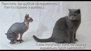 картинки животных с надписями