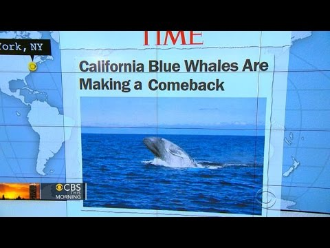 Headlines at 8:30: California's endangered blue whales making a comeback