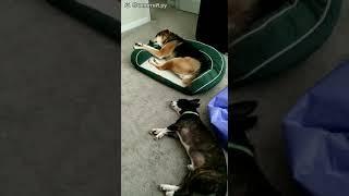 Непростой сон собаки