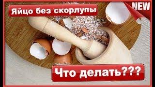 Птички несут яйца заработок на яйцах