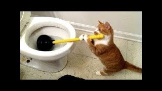 Funny Dogs and Cats Doing Funny Things 2018 || FunnyVines