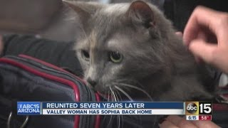 Cat reunited with its owners seven years later