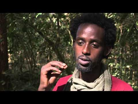 Ethiopie: seul pays au monde où le café pousse à l'état sauvage