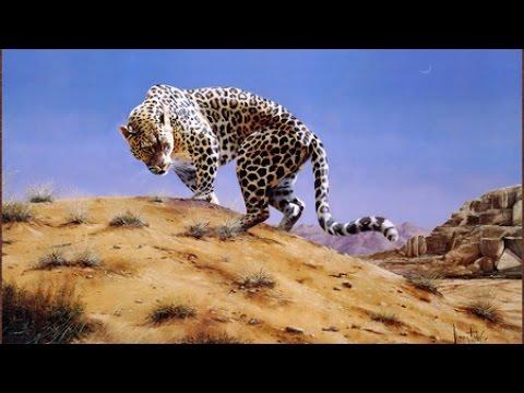النمر العربي في جبال طويق Arabian leopard