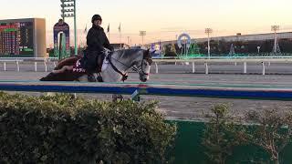 2019.1.18 船橋🐎誘導馬 チャラオ thumbnail