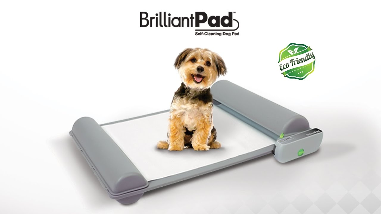 Brilliantpad World S First Self Cleaning Indoor Dog