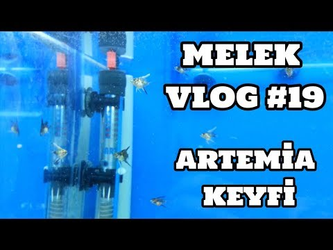 Melek Vlog #19 (Yavru Meleklerin Artemia Keyfi)