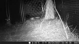 Bobcat recovery 2021