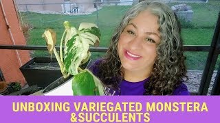 Unboxing Variegated Monstera Deliciosa & Succulents from a friend