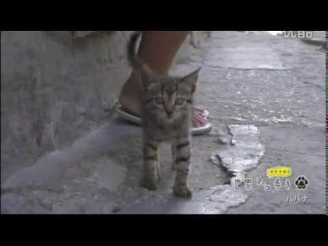 【悶絶注意】可愛すぎる子猫がにゃー!in Havana:Cute cat meows in Havana