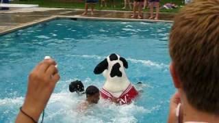 chick fil a cow jumping off diving board