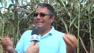 Agrícola Silagem produz volumoso na Chapada do Apodi em alta escala a partir do Sorgo Boliviano Giga