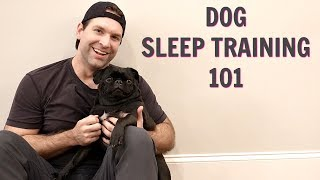 HOW TO GET YOUR DOG TO SLEEP IN HIS OWN BED