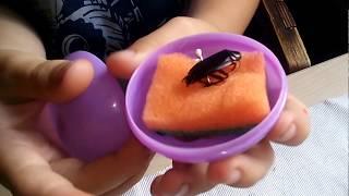 Чёрный таракан и новые полепки из пластилина