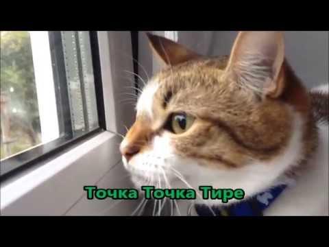 видео: Кошка радистка