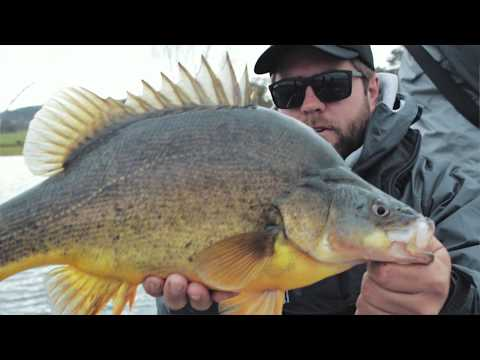 5 Must Have Lures For Yellowbelly Fishing
