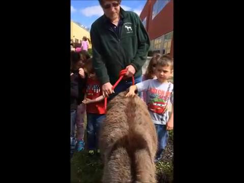 Romper and Stomper visit Abram Lansing Elementary School