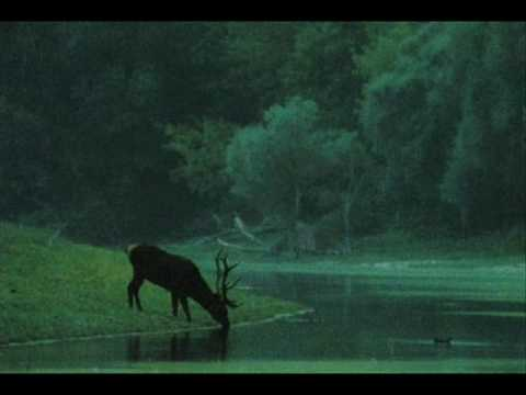 Zöld Erdőben / In Green Forest - Hungarian Folk Song