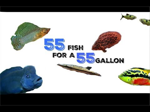 55 Stock Ideas For A 55 Gallon Aquarium