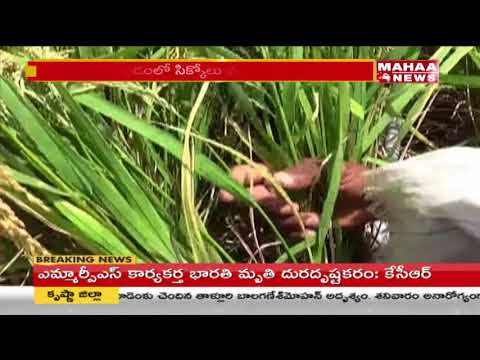 Agriculture Dept negligence delays aid to drought-hit farmers in Srikakulam | Mahaa News