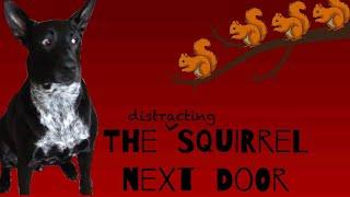 The Distracting Squirrel Next Door